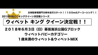 BLCC ウィペット キング クイーン決定戦!! パピーカテゴリー 2018...