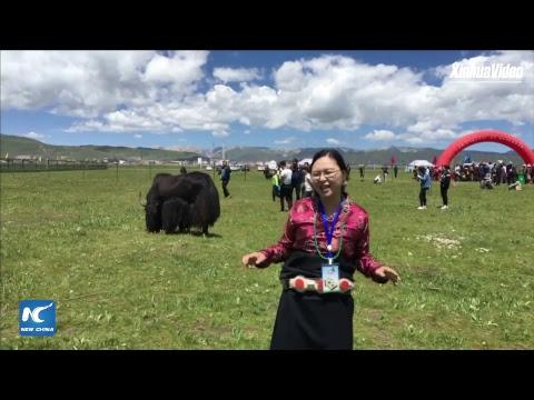 Horse racing on prairie 3,500 meters above sea level, in Gansu, China