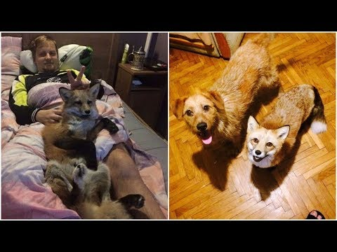 Family save a Baby fox from the fur farm then adopt dog from the shelter to be as best family forevr