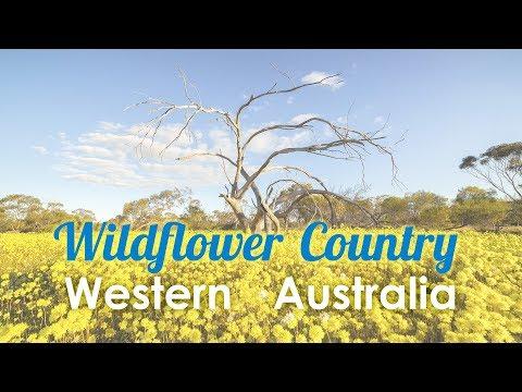 West Australian Wildflower Road Trip