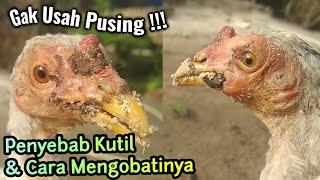 Tips mengatasi kutil pada ayam.