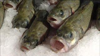 Realer Irrsinn: Meeresfischzucht im Saarland | extra 3 | NDR