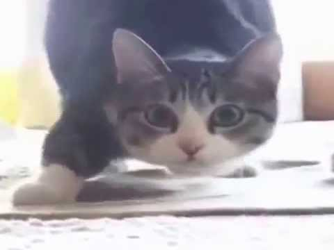 Cat Wiggle Wiggle Wiggle [FULL SONG/VIDEO]