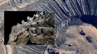 Increíble dinosaurio petrificado encontrado accidentalmente por mineros en Canadá