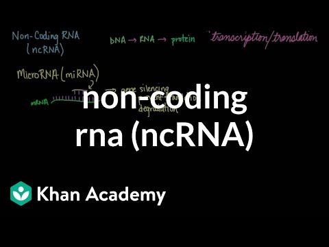 Non-coding RNA (ncRNA) | Biomolecules | MCAT | Khan Academy