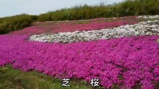 2016.04.14 フラワーパーク江南の咲き誇るお花たち