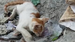 Download Video 3 anak kucing liar sedang bermain MP3 3GP MP4