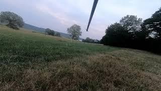 Chevreuil à l'arc