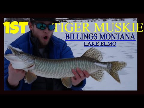 ICE FISHING - My FIRST TIGER MUSKIE - With An ULTRA LIGHT Rod! Lake Elmo - Billings,MT