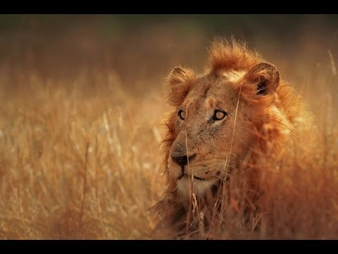 Zambia Documentary - Animals & Nature of Africa (Earth Docum