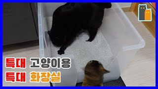 뚱냥이용 대형 화장실 만들기 [메이킹양집사]