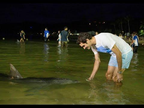 Roger Federer Aces Wild Dolphin Feeding In Brisbane