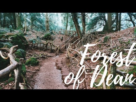 Travel Diary: Forest of Dean