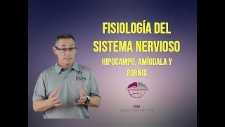 Download 12. HIPOCAMPO, AMÍGDALA Y FORNIX