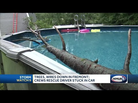 Powerful Storm Takes Down Trees In Fremont