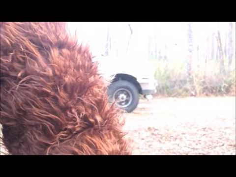 The Skunk Ape Files: run it at Bloody Bluff