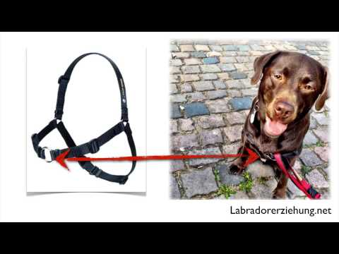 sense ation harness hundegeschirr youtube. Black Bedroom Furniture Sets. Home Design Ideas