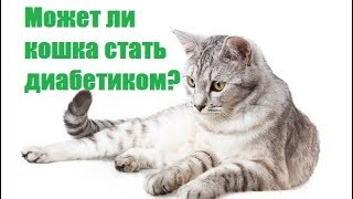 Диабет У Кошек &  Может Ли Кошка Стать Диабетиком. Ветклиника Био-Вет