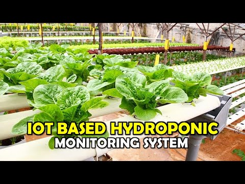 Download IOT BASED HYDROPONIC MONITORING SYSTEM  [ FYP 2020 ]