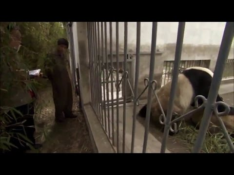 bears Life | Grizzly Bears Zoo | Animal planet | Animal life | Wild documentary