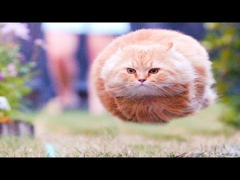 Funny Videos - Funny Cats - Funny Animals - Funny Kids - Funny Dogs