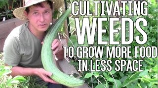 Cultivating Weeds to Grow More Food in Less Garden Space