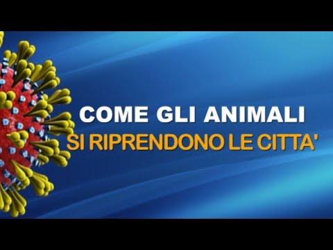 CORONAVIRUS - COME GLI ANIMALI SI RIPRENDONO LE CITTA'