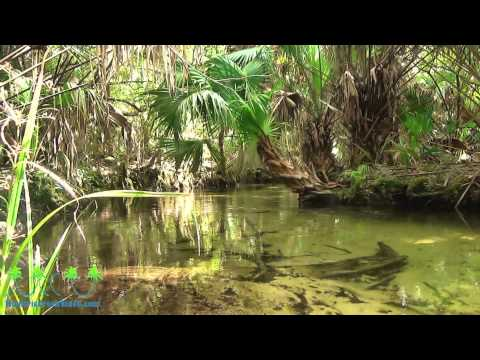 Juniper Spring by Ocala National Forest, Florida. Motion Picture with sound of Nature
