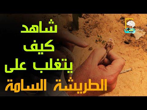 ماذا تفعل لو تعرضت للدغة ثعبان #الطريشة #السامة بعد ظهورها في#القاهرة #التجمع الخامس #الرحاب #مدينتي