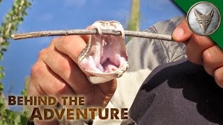 Can a Rattlesnake Bite Through Its Own Jaw?