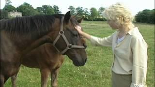 Ireland Unbridled on HRTV