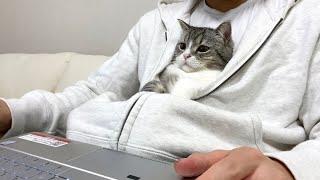 かまってもらえず寂しくて一緒に仕事に参加する猫がこちらです…笑