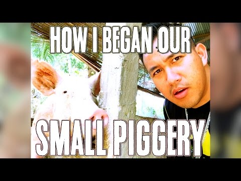 How I started a small piggery in Dumaguete