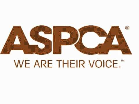 ASPCA dog abuse video with arms of the angel song