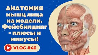 #46 Анатомия мышц лица на модели. Фейсбилдинг - плюсы и минусы!
