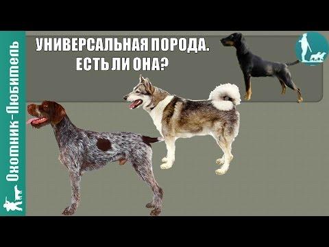 УНИВЕРСАЛЬНАЯ охотничья собака! Есть ли она? Охотник-Любитель
