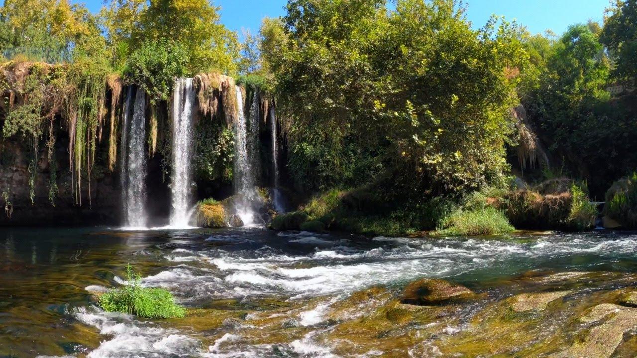 Melodias Relajantes de la Naturaleza - Canto de pajaros - Sonidos del Bosque - Relajarse