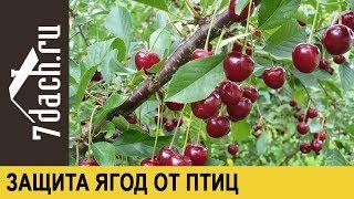 Как отпугнуть птиц и защитить урожай ягод - 7 дач