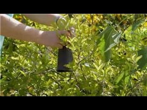 Garden Tips Recipe for Deer Repellents for Protecting Flowers