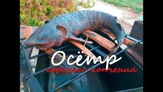 Осётр горячего копчения. Древнейший рецепт осетрины. Самая вкусная рыба горячего копчения!