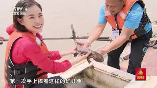 [远方的家]行走青山绿水间 四川江安长江巡护队:保护珍稀动物  CCTV中文国际