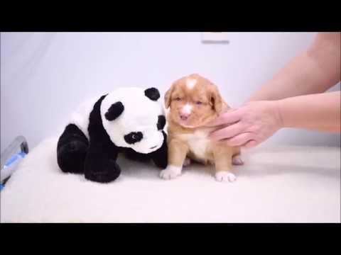Deseree's Puppies Present: Mr. Purple Week 5