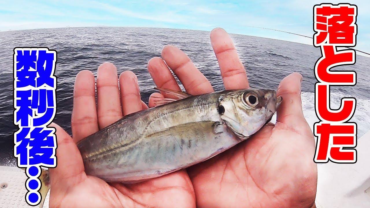 【アジ泳がせ】高級魚連発!
