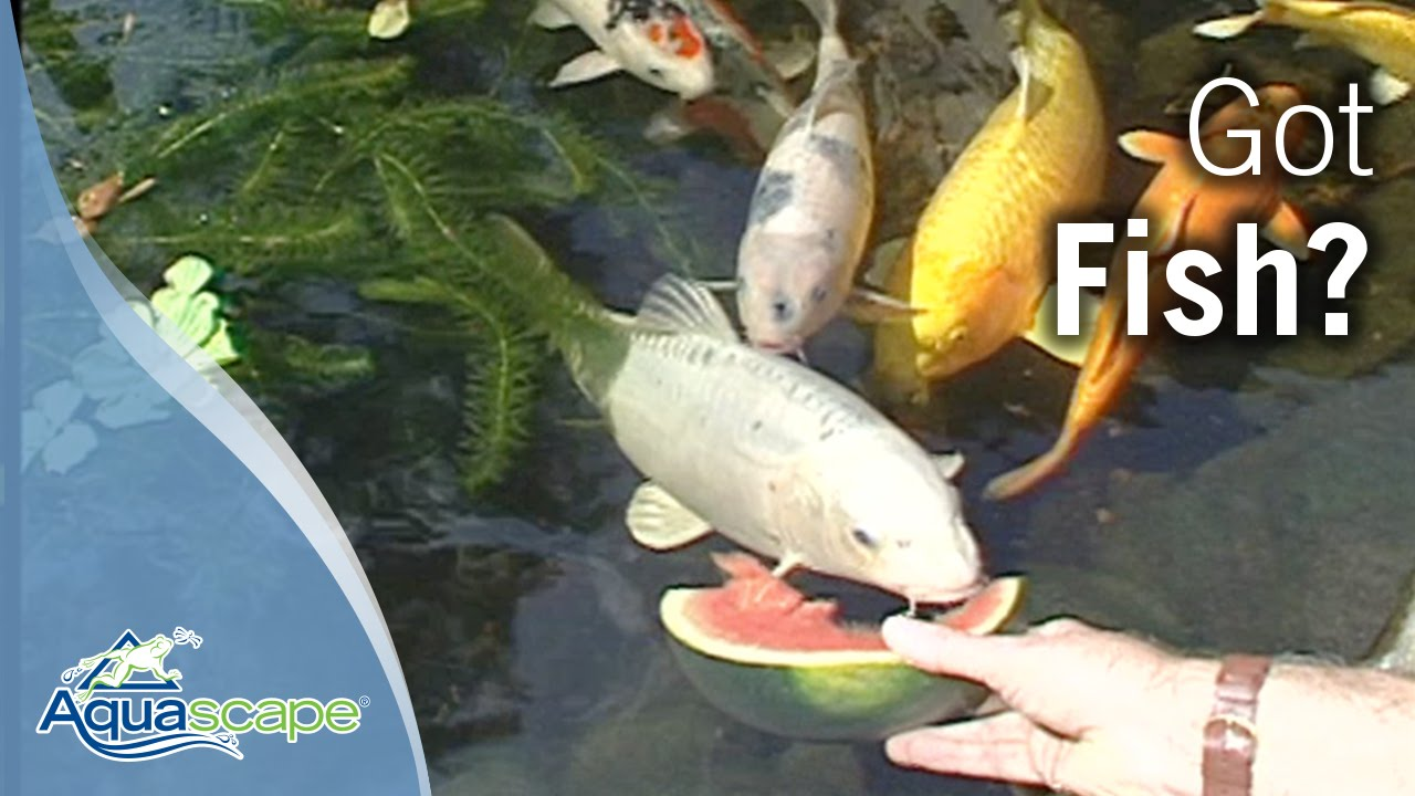 The Water Feature Lifestyle - Got Fish?