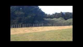 Melka Miniature Pinschers Going For A Farm Walk 2014