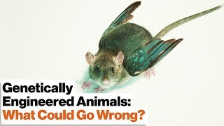 CRISPR's Gene Drive Could Revive Extinct Species–or Create New Ones | Jennifer Doudna