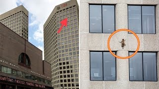 Raccoon Stuck On Skyscraper Ledge Makes Nerve-Racking Move After Rescuers Fail To Reach Her