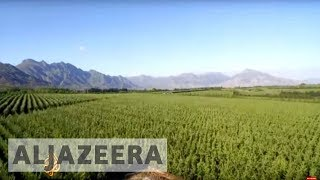 earthrise - Food: Farming for the Future - earthrise
