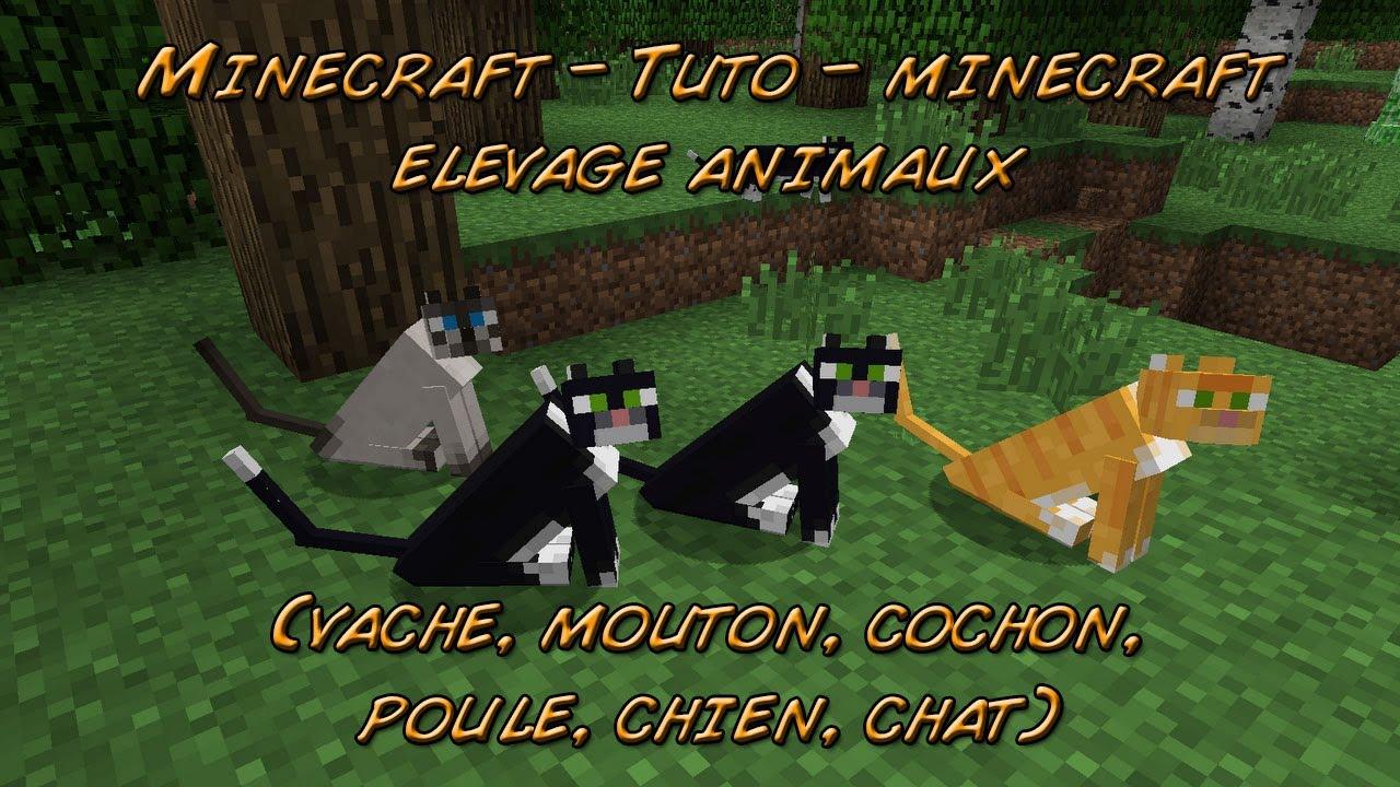 Minecraft tuto minecraft elevage animaux vache mouton cochon poule chien chat tuto - Minecraft cochon ...