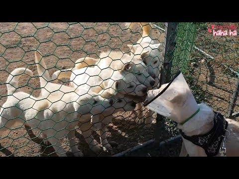 한달만에 엄마 만난 강아지들 반응